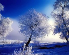 Árboles de Invierno