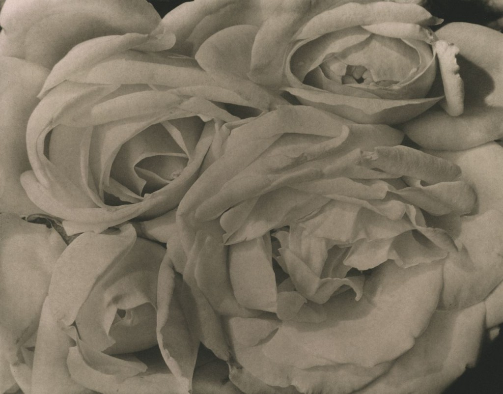 Rosas (1924)